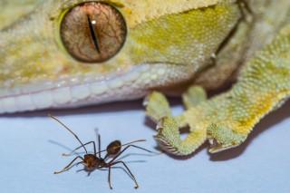 서로 몸집이 다른 도마뱀과 거미. - 데이비드 라본테 연구원 제공